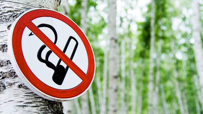 no smoking sign attached to a tree
