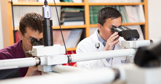 Peter Pytel, MD, and Deric Park, MD looking in microsopes