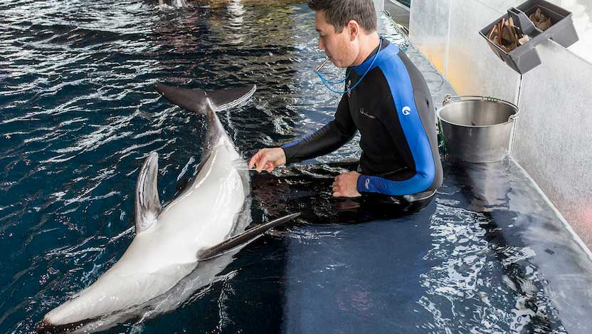 Dolphin microbiome testing
