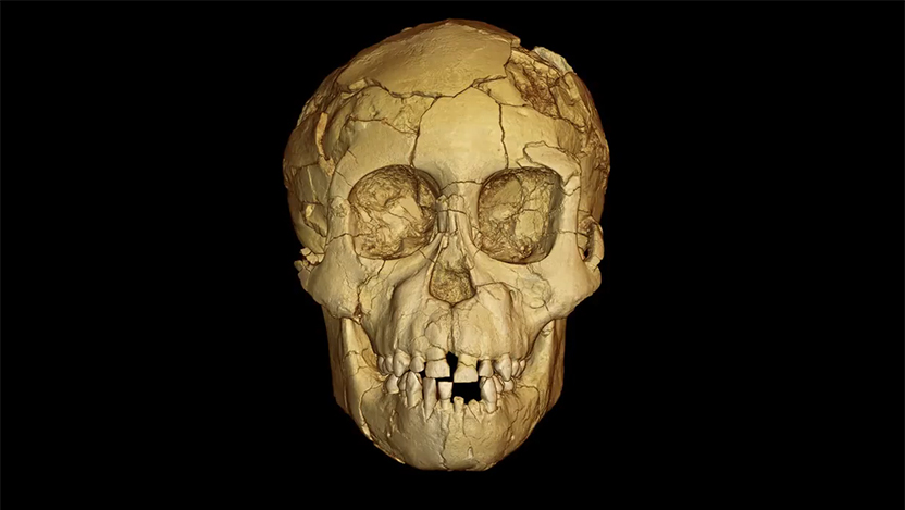 "Brain imprints in fossil skull of ""Lucy"""