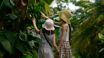 children touching plant