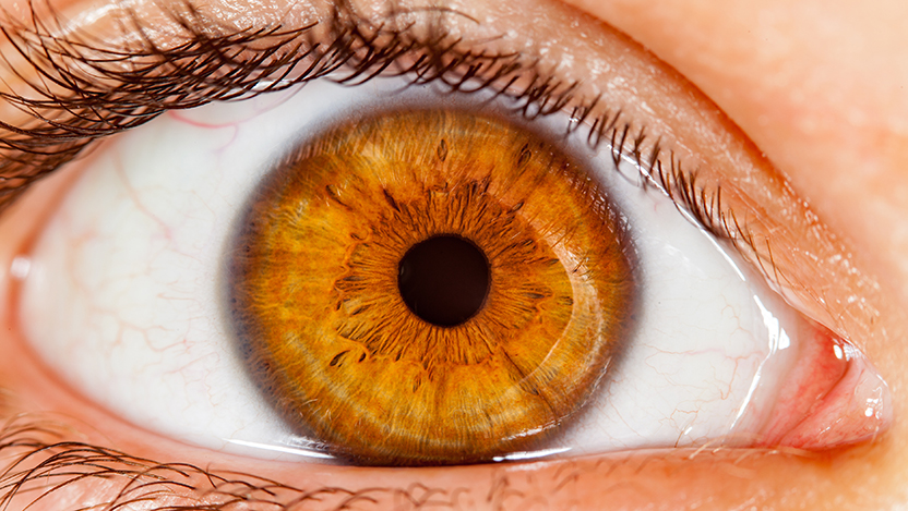 What can your eyes tell you about heart disease? - UChicago