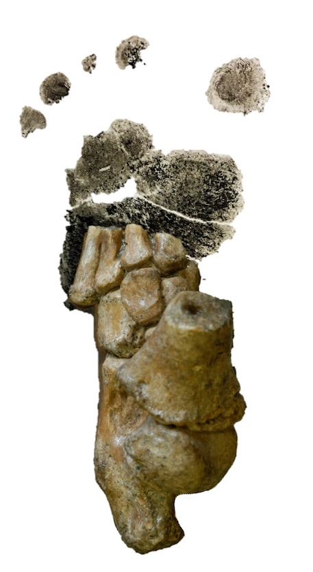 Dikika footprint