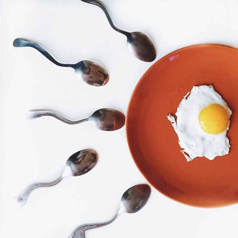 Sperm and eggs