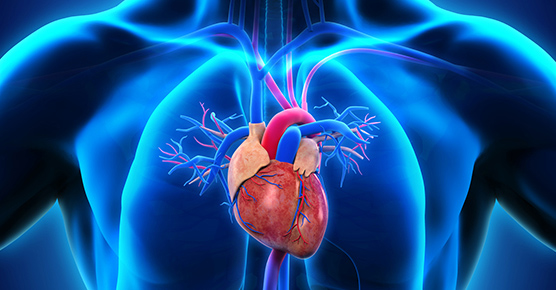 Clinical Trials Heart 556 x 290