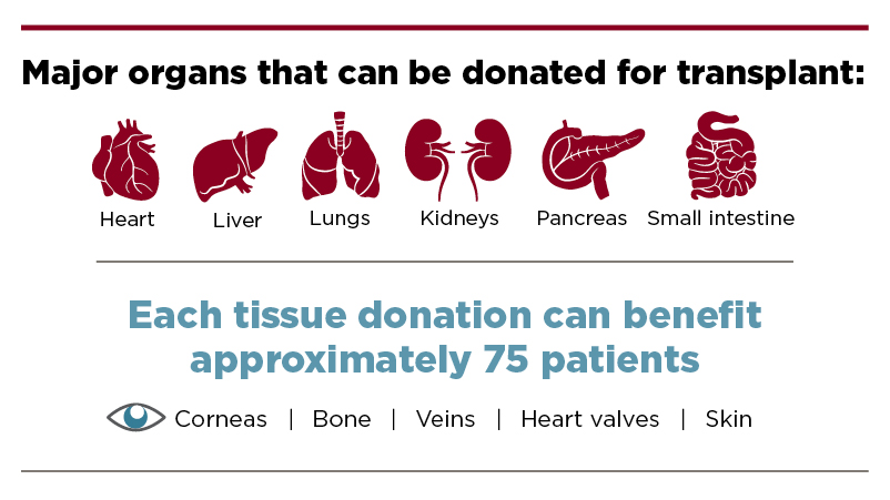Infographic outlining organs that can be donated for transplantation
