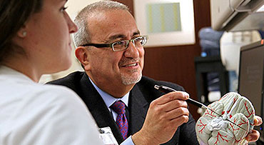 Neurosurgeon Issam Awad, MD, studying a brain model